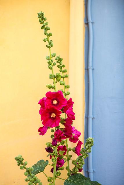 Wall & Flower