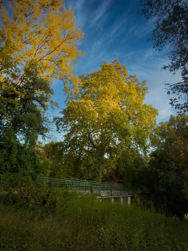 Lumières d'automne... 50524174831_9e0c1bc75a_b