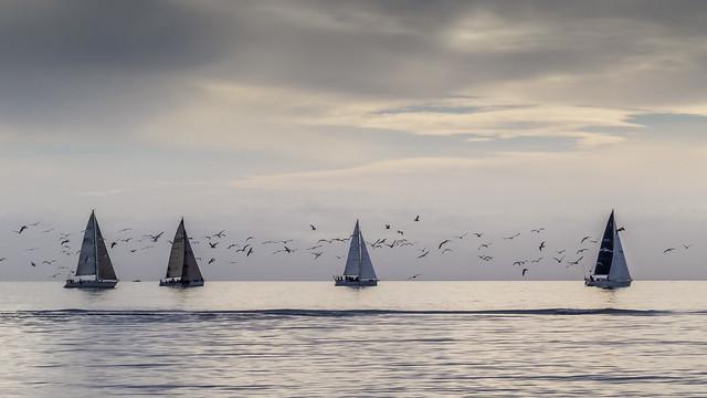 Birds 'n Boats