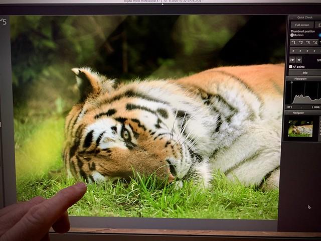 437/365 - The tiger's eye