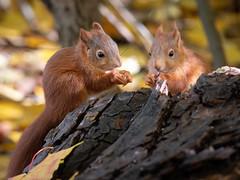 Squirrelbabys (in-explore-2020-10-25)