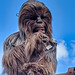 """<p><a href=""""https://www.flickr.com/people/fisherbray/"""">fisherbray</a> posted a photo:</p>  <p><a href=""""https://www.flickr.com/photos/fisherbray/50524479033/"""" title=""""Star Wars: Galaxy&#039;s Edge - Disney&#039;s Hollywood Studios""""><img src=""""https://live.staticflickr.com/65535/50524479033_7d9687c059_m.jpg"""" width=""""180"""" height=""""240"""" alt=""""Star Wars: Galaxy&#039;s Edge - Disney&#039;s Hollywood Studios"""" /></a></p>  <p>Chewbacca in the Star Wars: Galaxy's Edge area of Disney's Hollywood Studios near Orlando, Florida. Due to the current COVID-19 travel restrictions, the park is virtually empty compared to normal park crowds.</p>"""