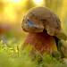 Macro Mushrooms_00087