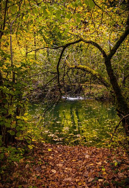 L'automne sur les rives du Cusancin