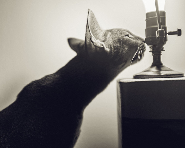 Inspecting the lamp.