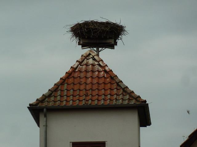 Weißstorch (Ciconia ciconia) (2)