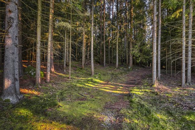 When the last rays of sun fall through the trees-wenn die letzten Sonnenstrahlen durch die Bäume fallen
