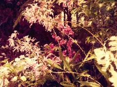 Orchids in the Atrium