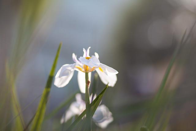 White Flower Art