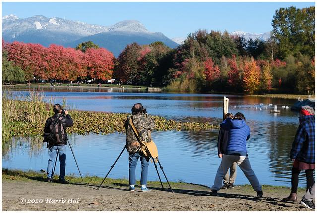 Shoot The Fall Color - Trout Lake Park XTT0380e