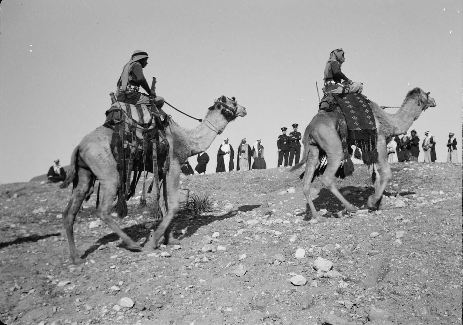 02. Верблюды достигают вершины