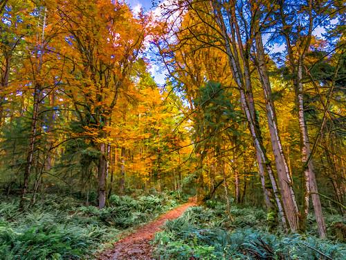 autumn fall painting ferns landscape autumnlandscape falllandscape scenicview autumnscene colorful pacificnorthwestlandscapes vancouverislandlandscapes sandyhillphotography