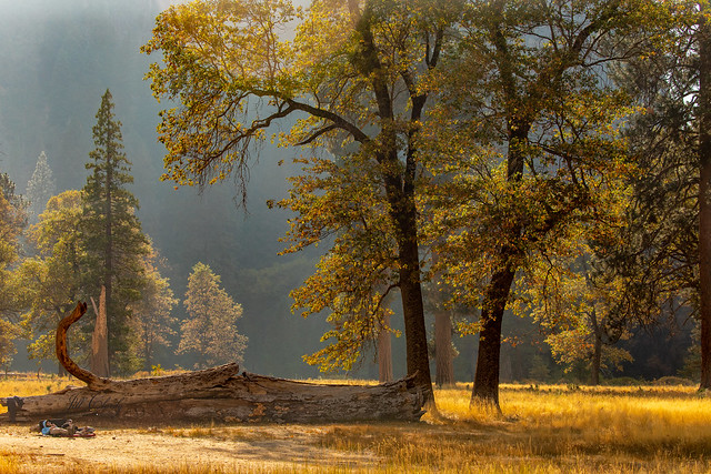 El Capitan Meadow, Yosemite in Autumn