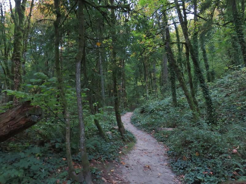 Wild Cherry Trail