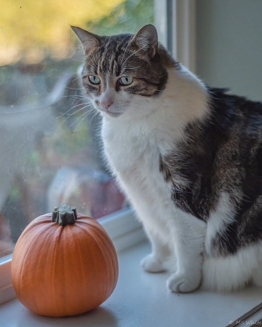 Waiting for the Great Pumpkin?