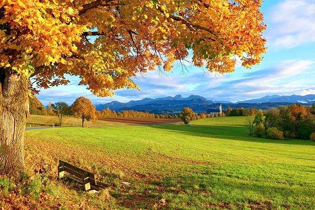 Golden October - last day of summertime (CEST) / scho wieda Wilparting...