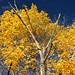 Fenner Fall Foliage