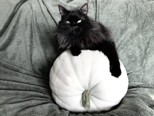 PUMPKIN PATCH CATS 1 0F 2