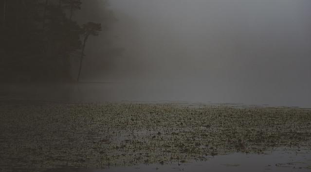 Misty Pond (1 of 1)