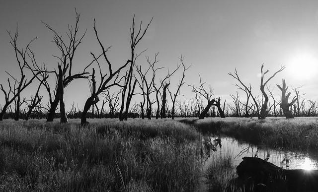 Winton Wetlands Central North Victoria
