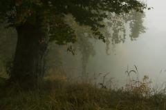 Autumn tree  (由  Piotr Ogłaszewski