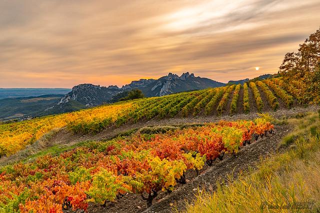 Couleurs d'automne sur les vignes