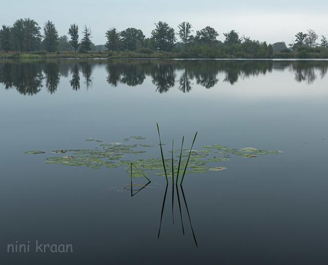 Belvers marsh - Oisterwijk - Netherlands