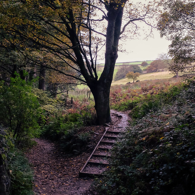 Woodland path at Digley