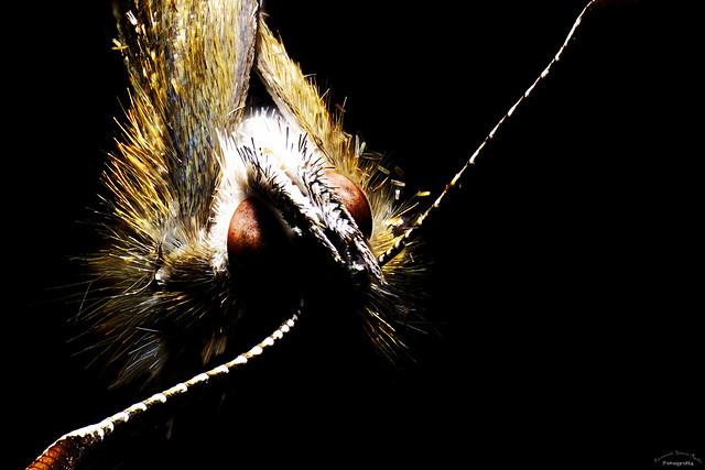 Retrato de una pequeña mariposa Portrait of a small butterfly