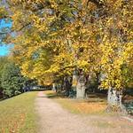 Autumn at Avenham at Preston
