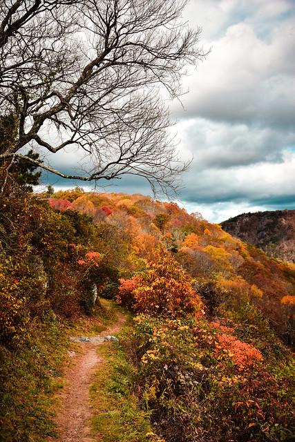 Blue Ridge Fall 2020