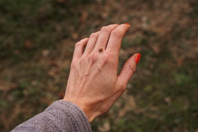 Ladybug of fall