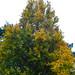 "<p><a href=""https://www.flickr.com/people/dunnock_d/"">Dunnock_D</a> posted a photo:</p>  <p><a href=""https://www.flickr.com/photos/dunnock_d/50527575586/"" title=""Tree in Overleigh Cemetery, 2020 Oct 24""><img src=""https://live.staticflickr.com/65535/50527575586_cfaceabc53_m.jpg"" width=""180"" height=""240"" alt=""Tree in Overleigh Cemetery, 2020 Oct 24"" /></a></p>  <p>River Lane, Chester, England<br /> <br /> Filename: DSC01994a</p>"