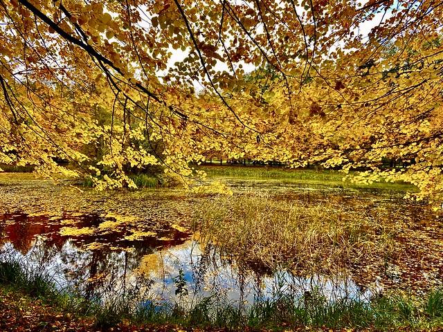 Angekommen im Herbst !
