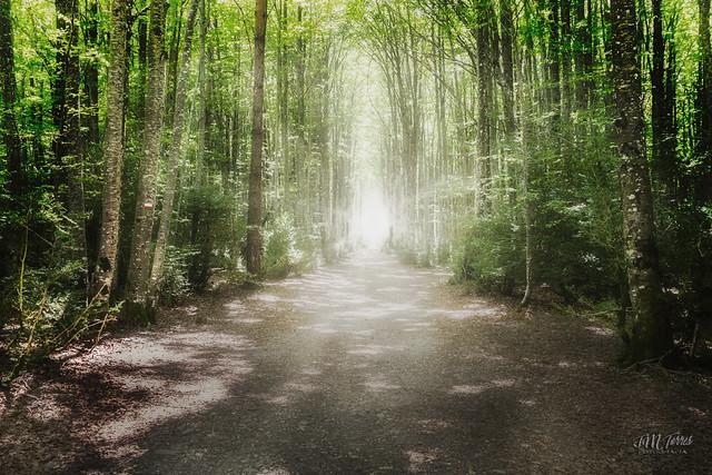 """El bosque encantado """"EXPLORE"""""""