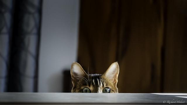 Le regard de Félix