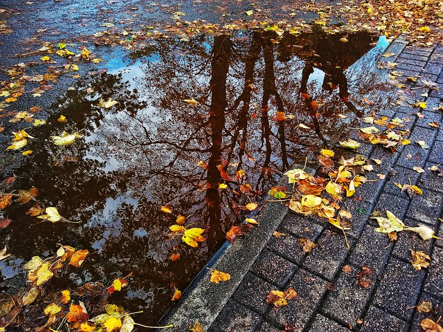 Puddle town