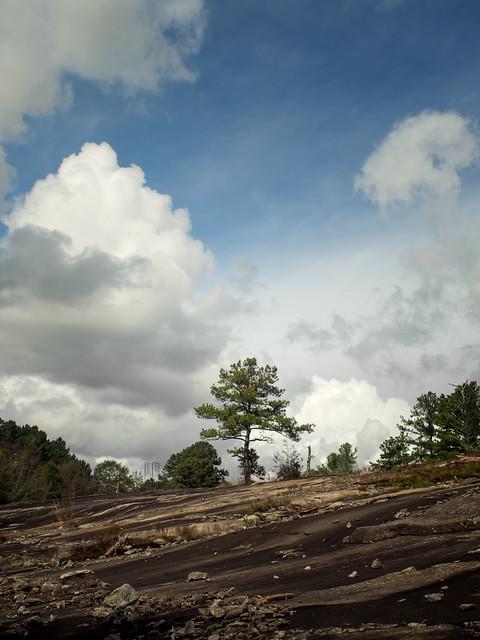 Inselberg pine