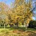 """<p><a href=""""https://www.flickr.com/people/tonyworrall/"""">Tony Worrall</a> posted a photo:</p>  <p><a href=""""https://www.flickr.com/photos/tonyworrall/50528016618/"""" title=""""Ashton Park Autumn colours""""><img src=""""https://live.staticflickr.com/65535/50528016618_d028874099_m.jpg"""" width=""""240"""" height=""""135"""" alt=""""Ashton Park Autumn colours"""" /></a></p>"""