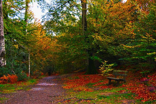 En forêt, fin octobre.