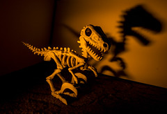 Vinny velociraptor skeleton shadow