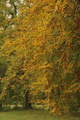 Herfst Amelisweerd 3