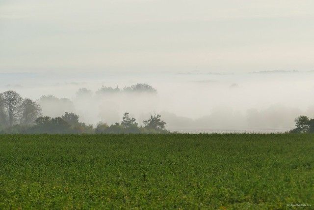 Paysage charentais sous le brouillard.
