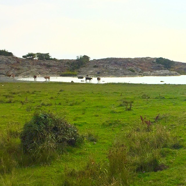 Tofta Nature Reserve III