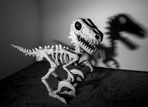 Vinny velociraptor skeleton shadow bw | by Ray Duffill