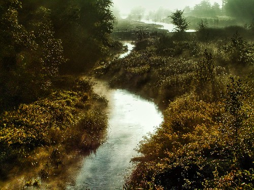 Bruch - Moorbach golden