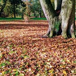 Autumn at Ashton Park