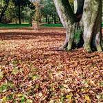 Autumn at Ashton Park