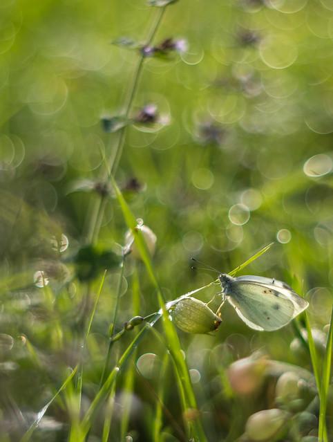 Bubble_Focus