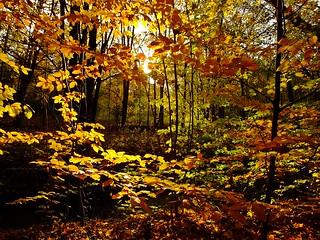 im Herbstlicht - in the autumn light